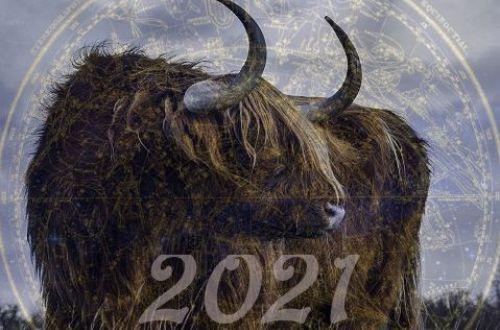 Задобрить Быка нужно правильно: таролог рассказала, как встречать Новый год 2021